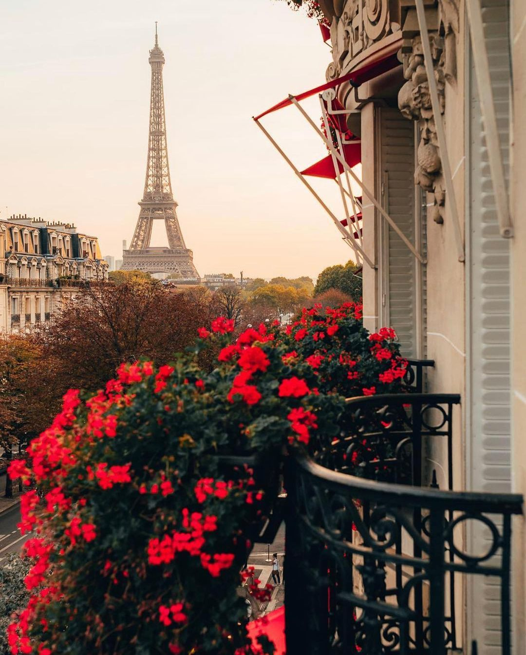 red roses and the eiffel tower in paris petite in paris