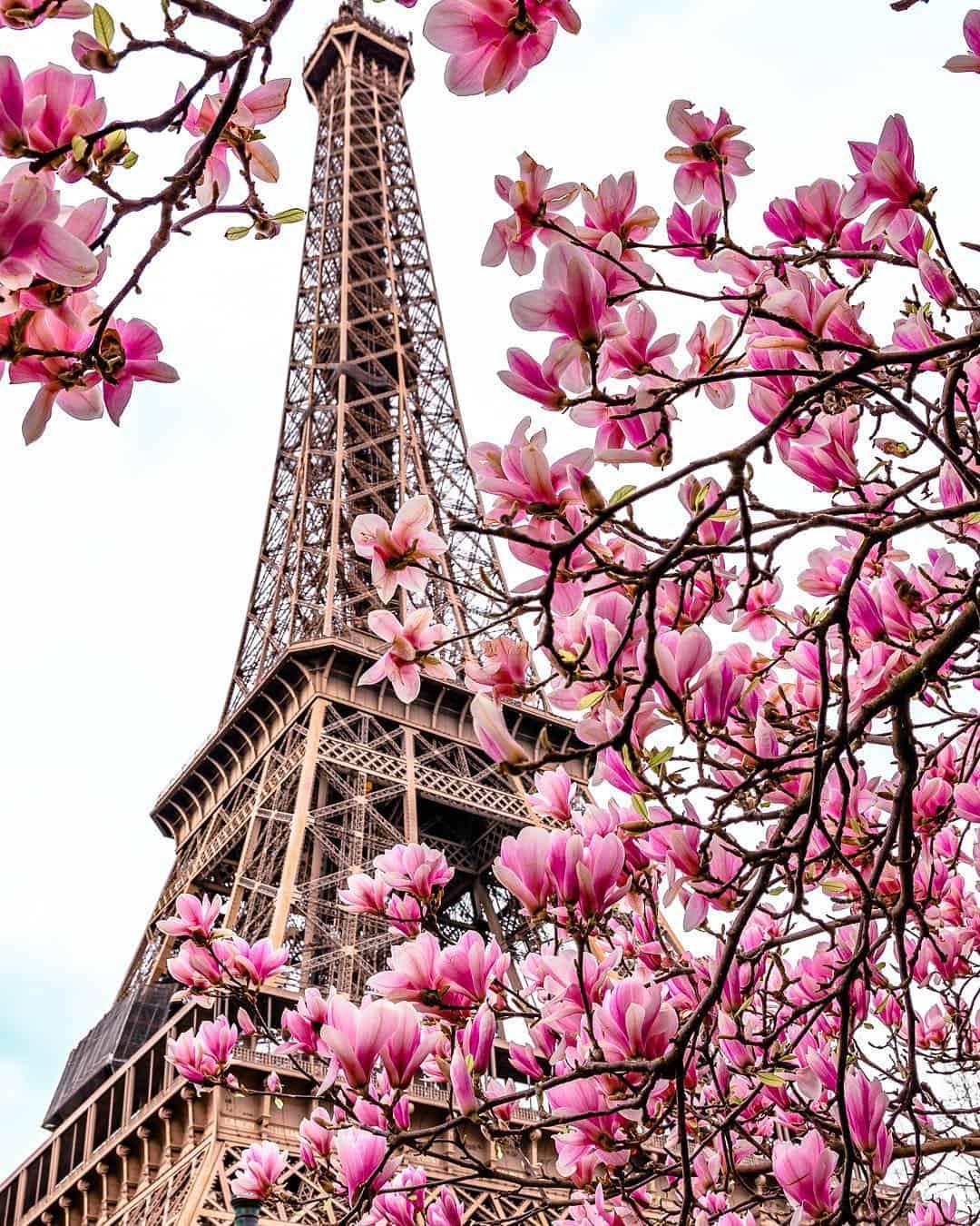 paris in bloom petite in paris travel blog